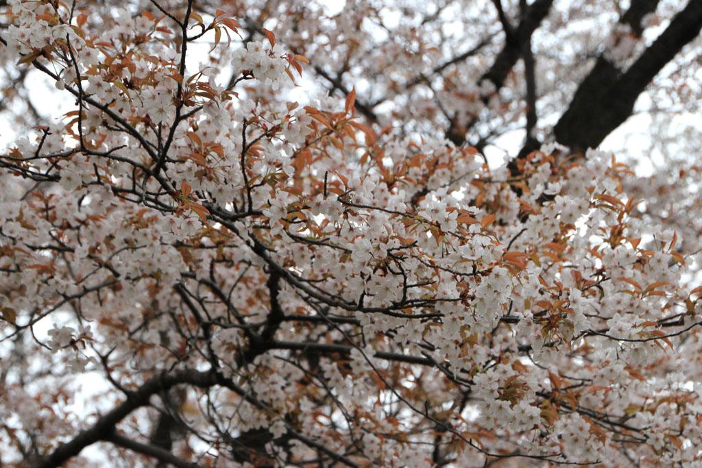 http://www7285uf.sakura.ne.jp/nazo/blog/img/2013/04/IMG_4132.jpg